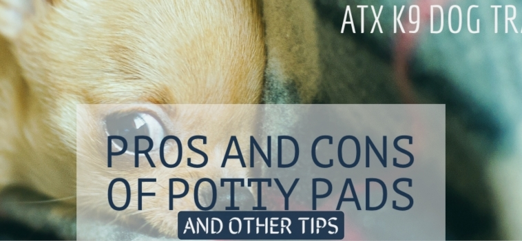 Pros and Cons of Potty Pads (and other tips!)
