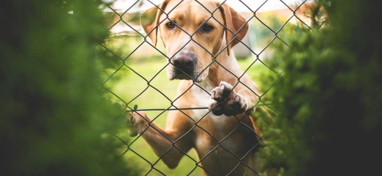 Crate Training: Don't fence me in?