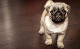 Nervous Puppy?